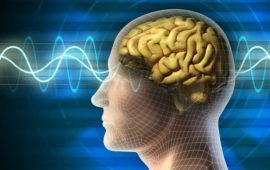 4 Herbs that will improve your Memory – Brain Food