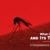 WHAT IS DENGUE AND ITS TREATMENT? A COMPREHENSIVE GUIDE YOU MUST KNOW